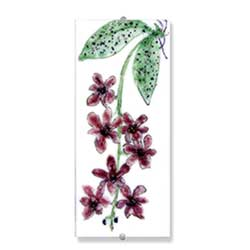 Orchid - Judith Menges