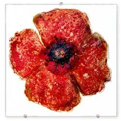 Red Poppy - Judith Menges